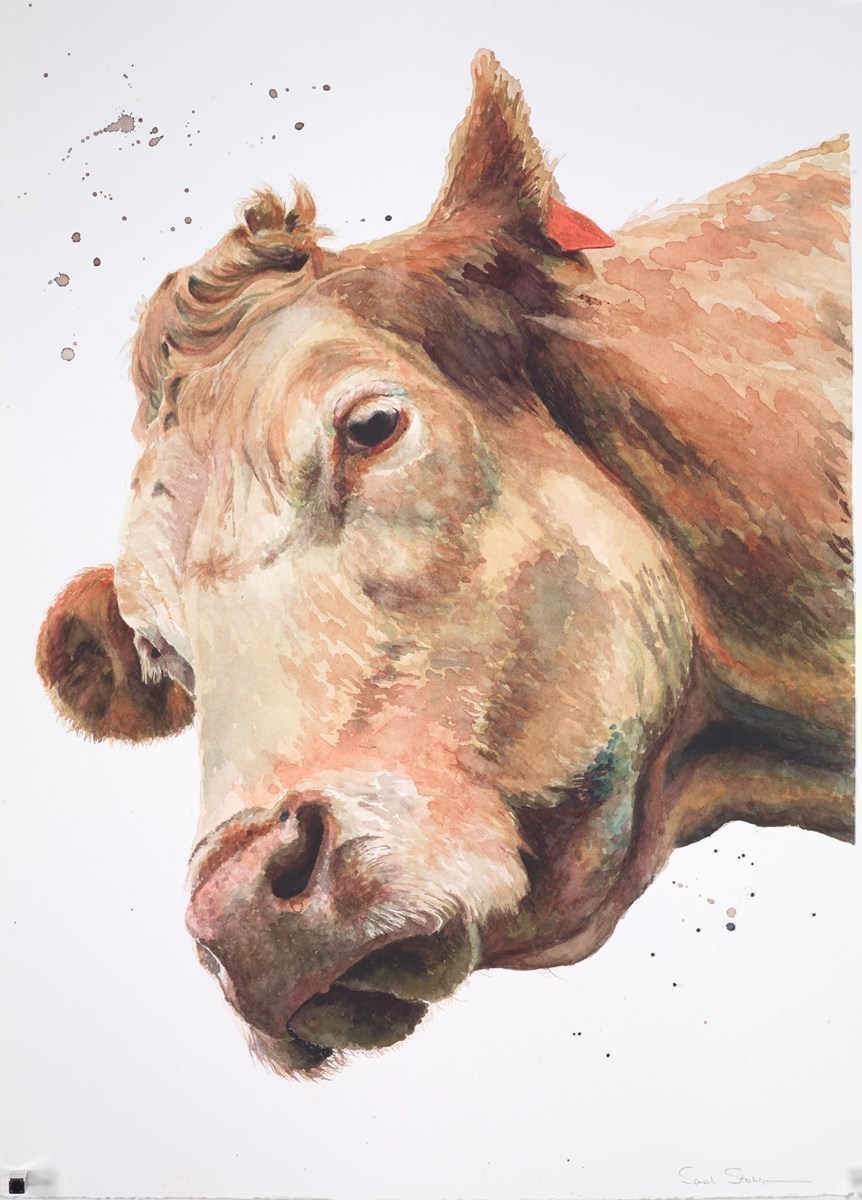 Buttercup by Sarah Stokes -  sized 22x30 inches. Available from Whitewall Galleries